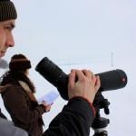 Преброяване на зимуващите дневни грабливи птици
