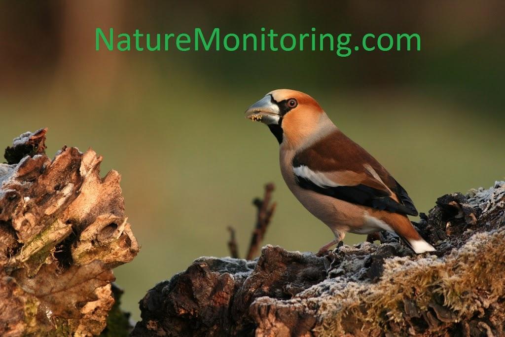 nature_monitoring_logo