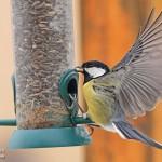 Garden birds photography