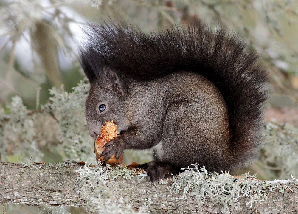 Squirrel photography by Iordan Hristov
