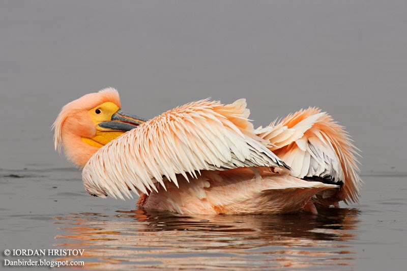 bird photography tours in Bulgaria