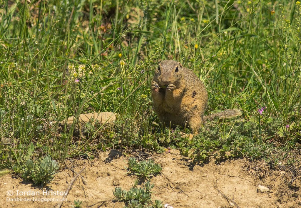 mammal photography in Bulgaria