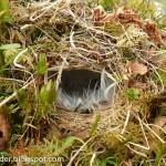 Breeding bird survey in Norway: day 7