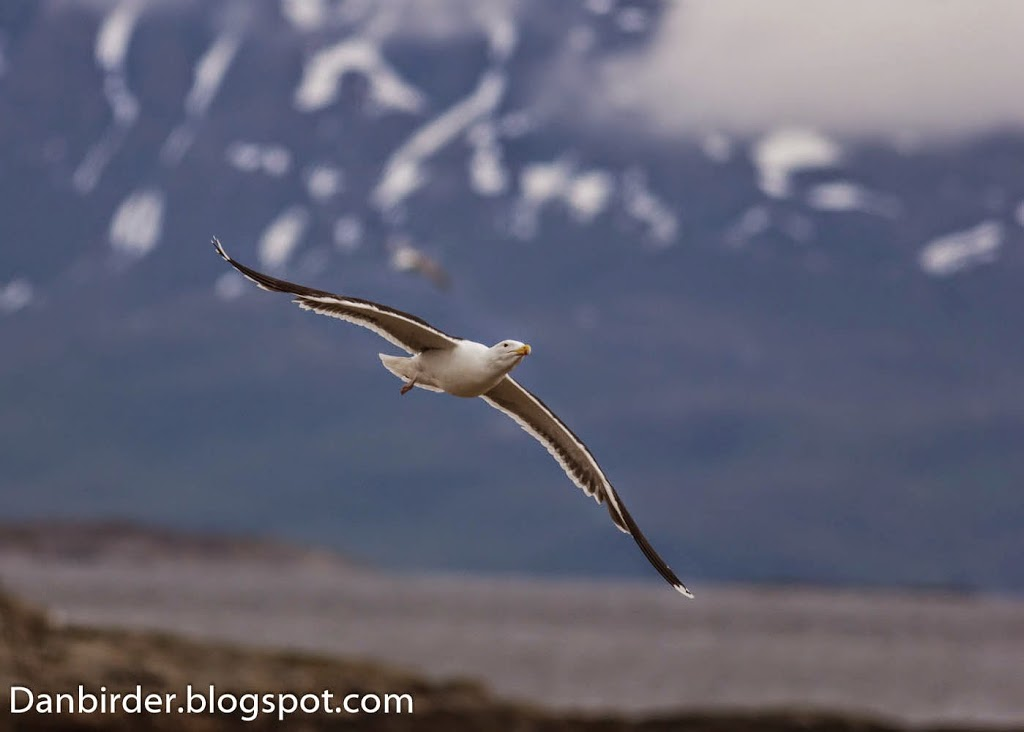 Bird_photography_Norway_Iordan_Hristov-4430