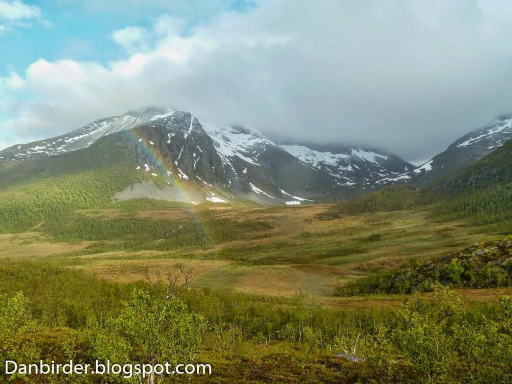 Bird_survey_Norway_Iordan_Hristov-1090736