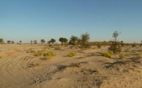 Muntasar Oasis