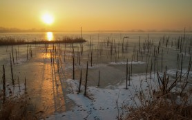 Mid winter count of waterbirds