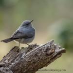 Bird photography in Oman: day 11, 14.12.2014