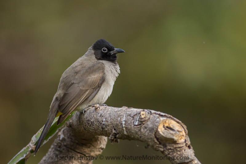bird photography in Oman