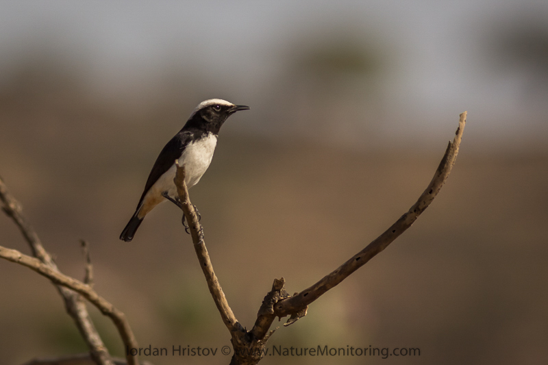 bird photography in Oman