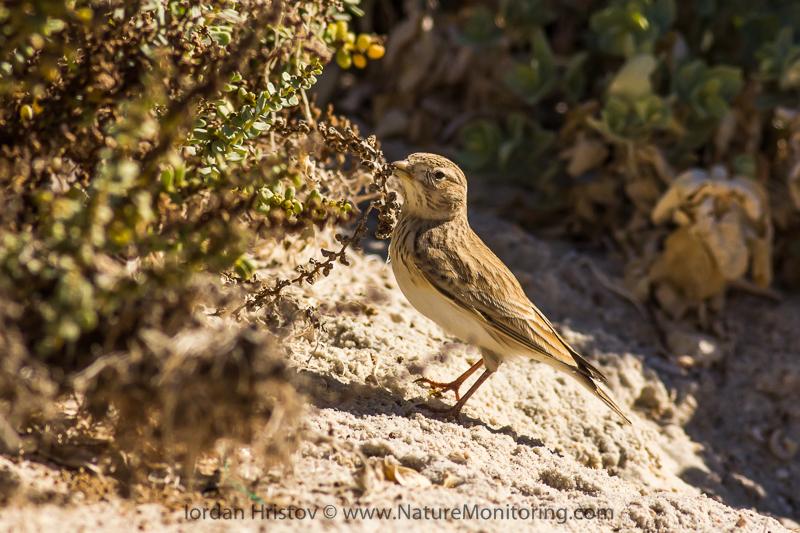 bird photography trip to Oman