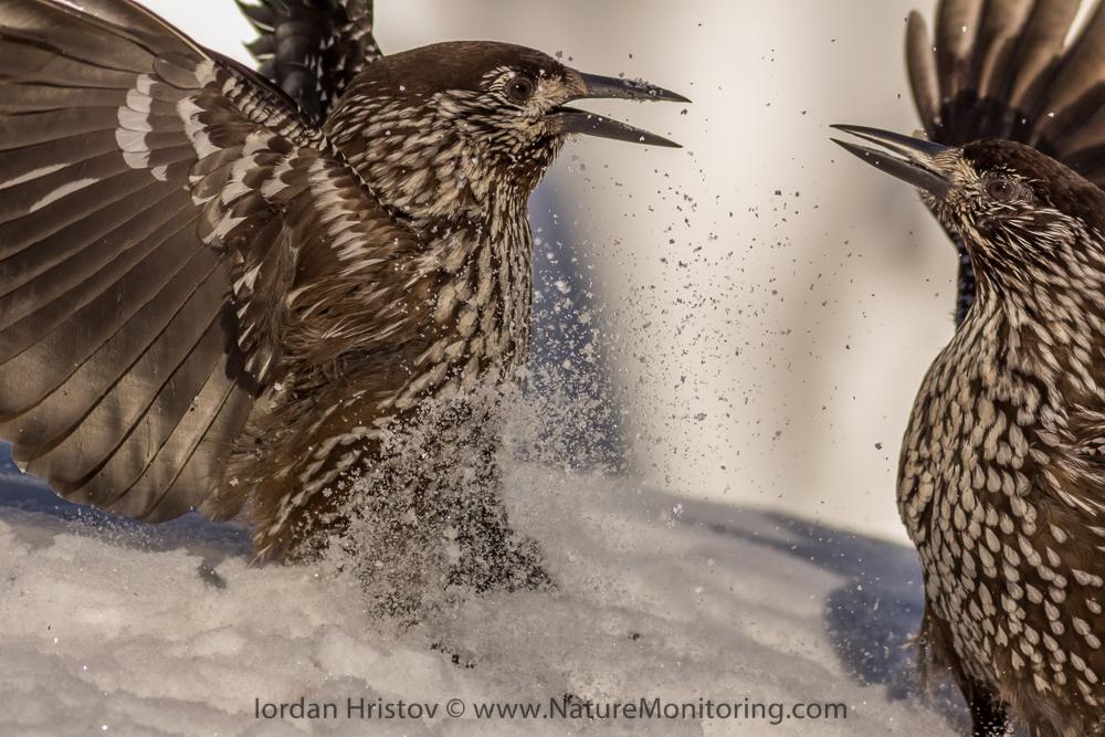 в битка, снимка Йордан Христов