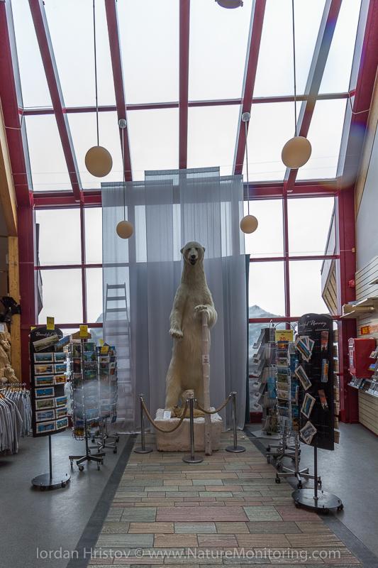 Polar bear in the arctic circle shop