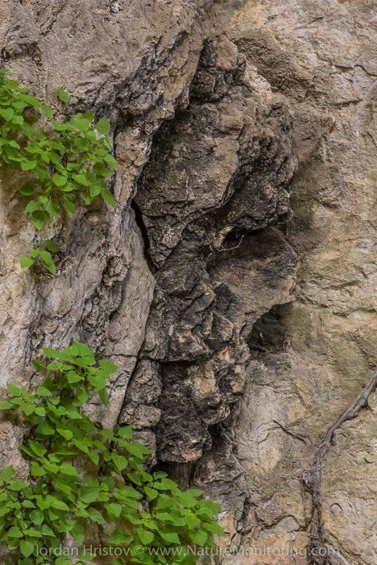 Prohodna cave, Bulgaria © Iordan Hristov