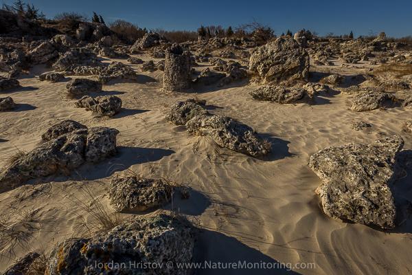 пясъчни дюни в пустинята