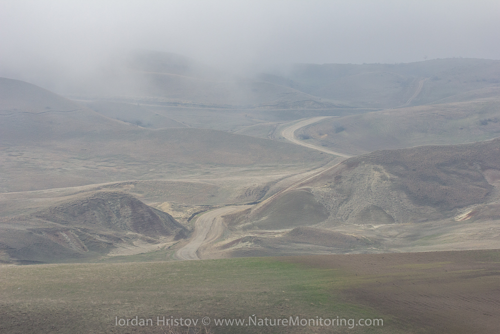 Georgia steppe