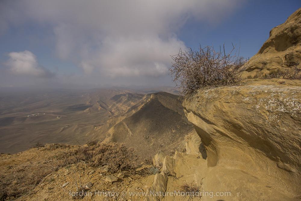 The vast steppes