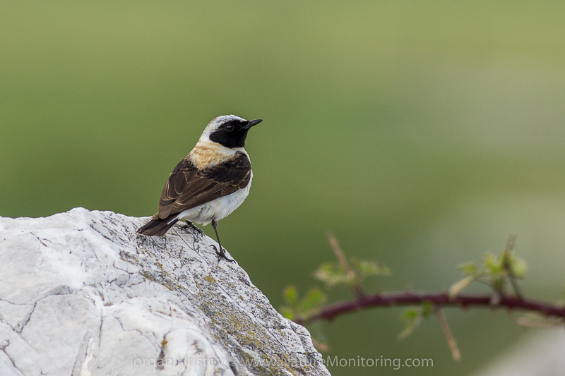 birdwatching trip