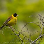 New birding trip: day 1