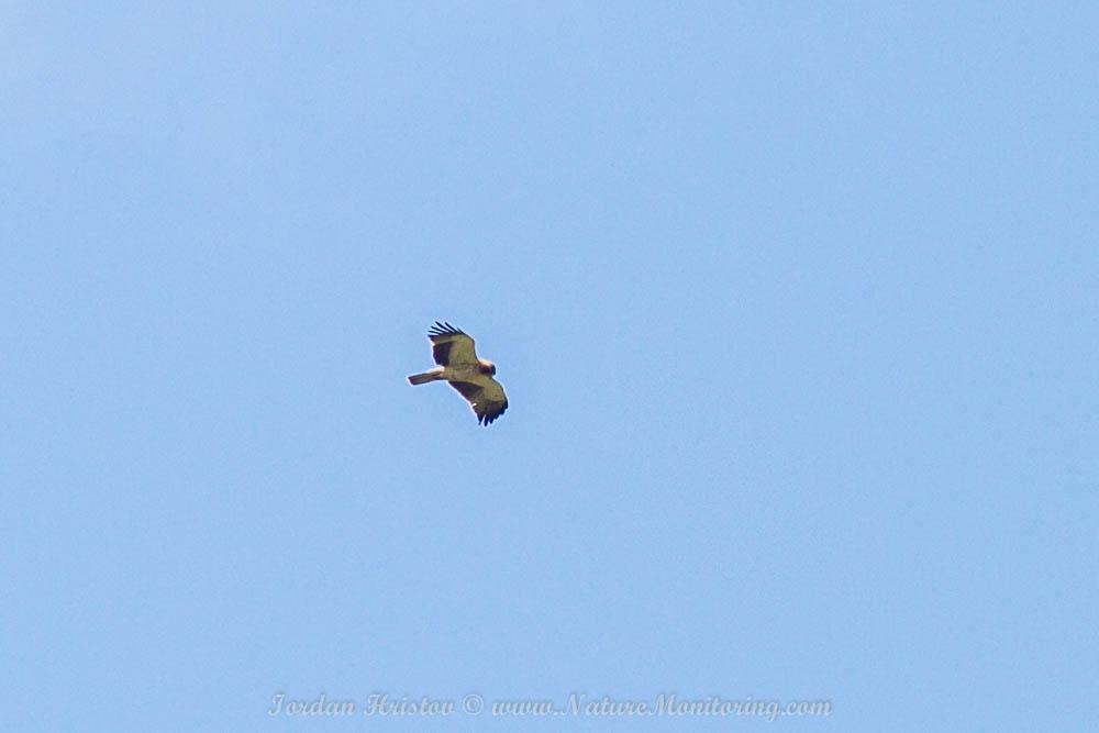 guided birding trip in Bulgaria