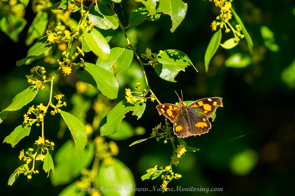 butterfly in northern greece
