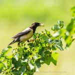 Birdwatching trip in Northern Greece