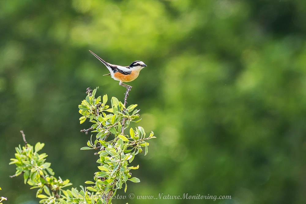 birdwatching trip in Northern Greece