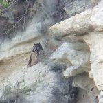 Birding trip in Bulgaria, day 8 of 8