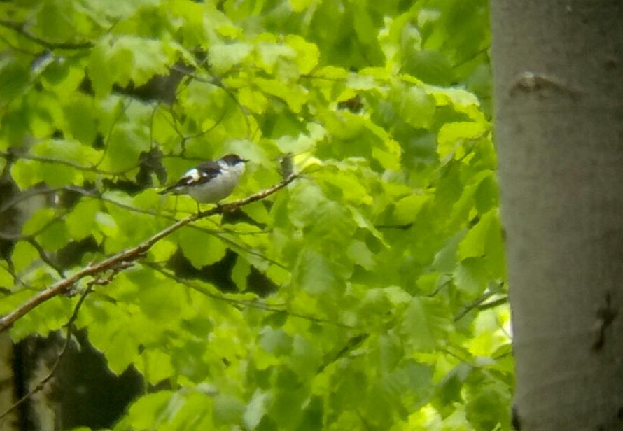 Birdwatching trip in Bulgaria