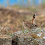 Birding trip in Bulgaria, day 6 of 8