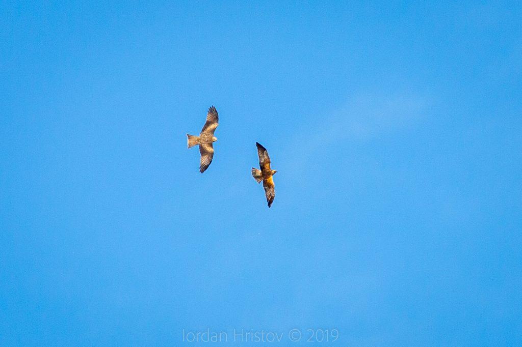 Birdwatching trip to Greece