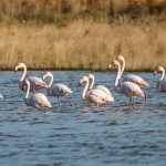 Birdwatching trip to Greece: Porto Lagos
