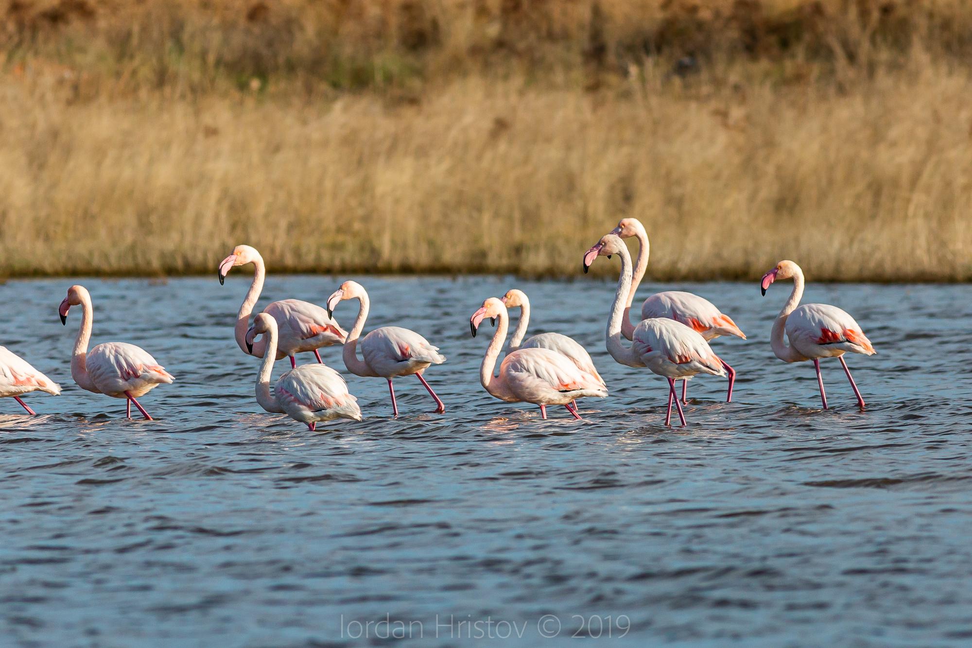 Birding guide to Greece
