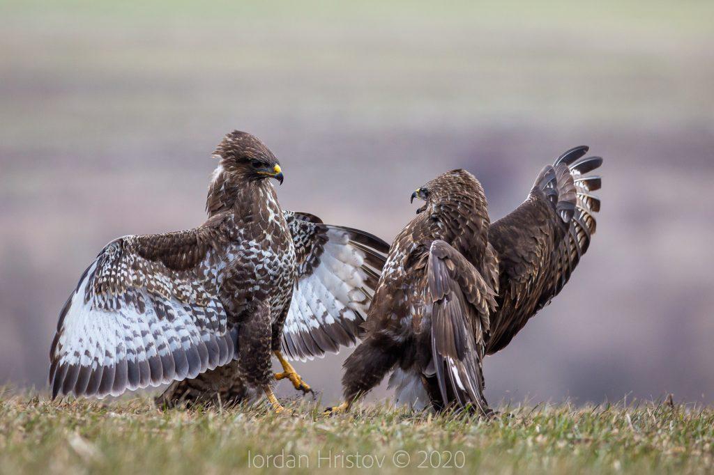 best bird photography guide in Bulgaria
