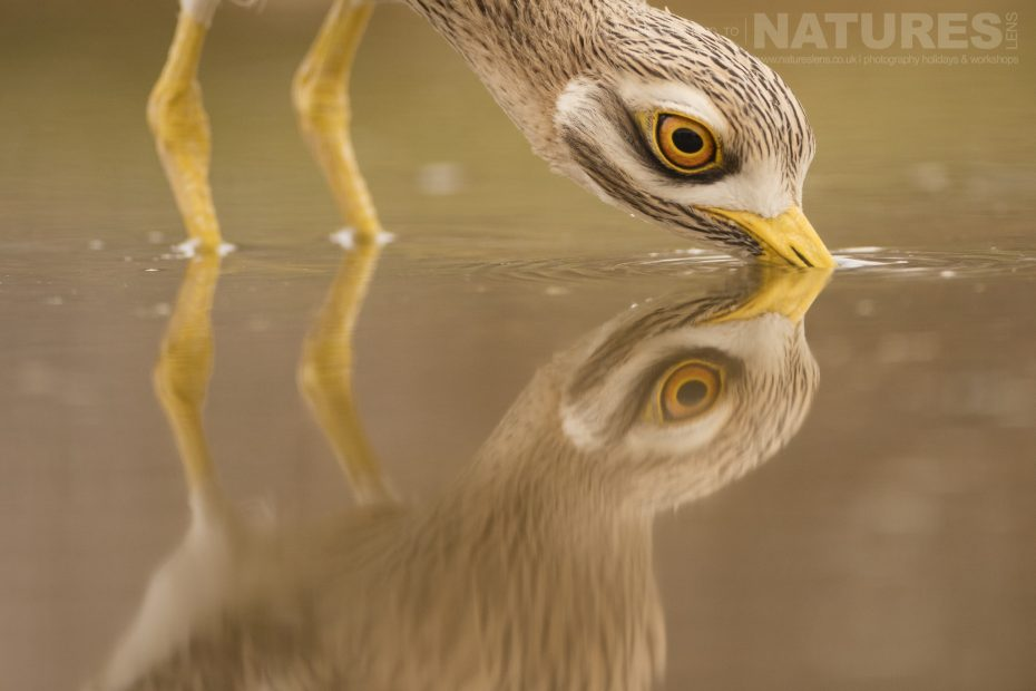 bird photography trip to Central Spain