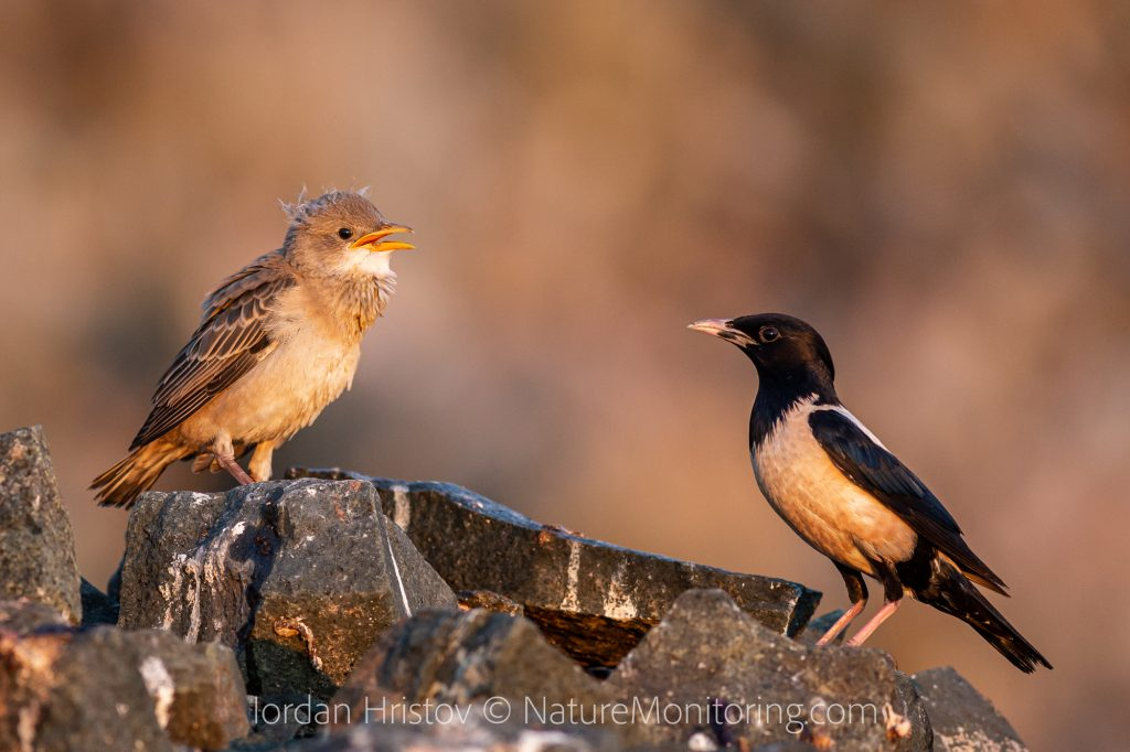 guided bird photography trip in Bulgaria
