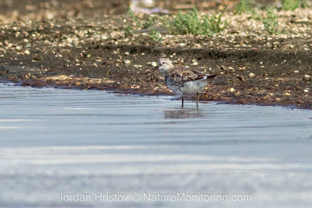 first great knot for bulgaria