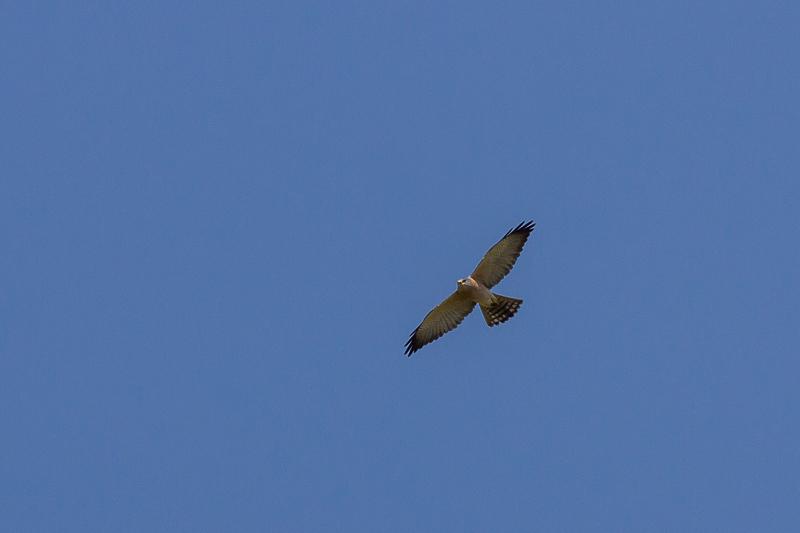 guided birdwatching trip in Bulgaria