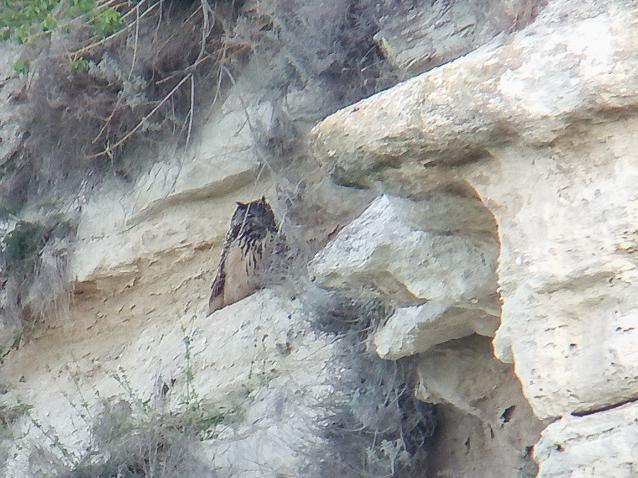 Birding in Bulgaria